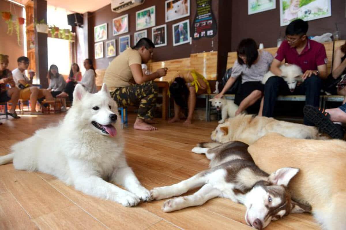 Mô hình kinh doanh kết hợp quán cafe với giao lưu thú cưng